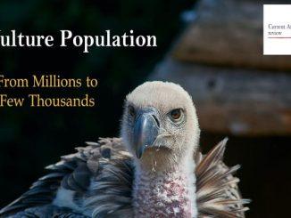 Vulture Population
